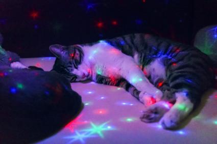 Cat sleeping on the couch with a toy lamp illuminating star shapes