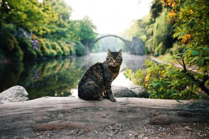 Cat Sitting By Lake In Forest