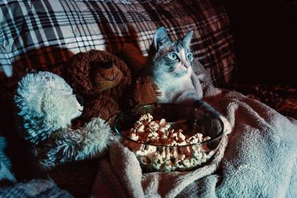 Cat is watching a movie and eating a popcorn