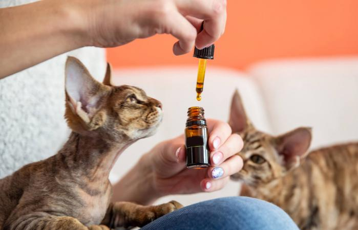 Giving Cat Essential Oil Drops