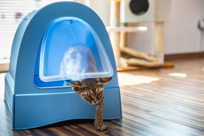 Domestic Cat Using Modern Litter Box