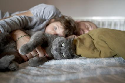 Grey cat resting on bed with toddler girl and father