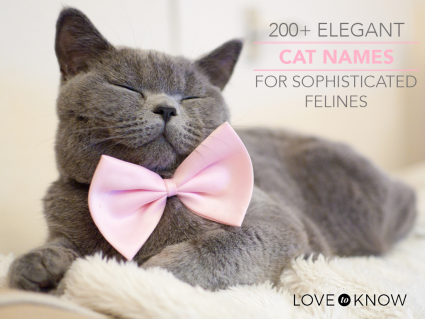 Elegant Grey cat with with content expression wearing a pink bow tie
