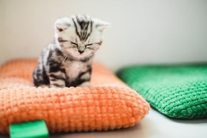 kitten on a pillow