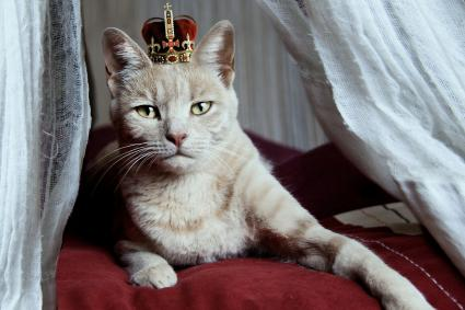 Portrait of white cat with crown on head