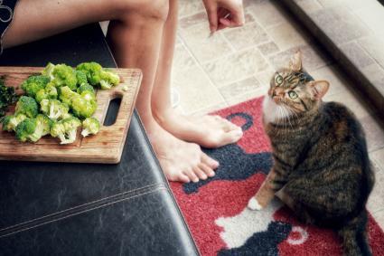 Cat looking at Broccoli