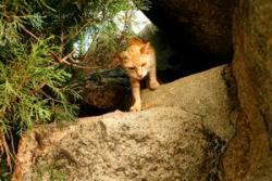 Stray cat roaming
