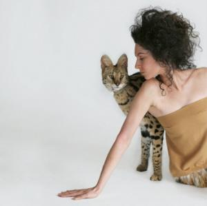 Savannah cat with model