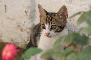 Kitten outdoors