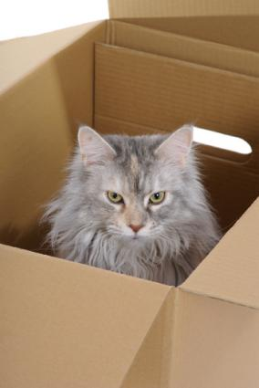 Image of a longhair cat in a cardboard moving box