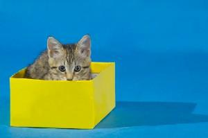 A kitten in a bright yellow box