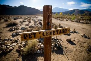 Image of a pet cemetery in the desert