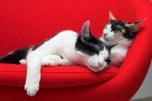 Two cats sleeping on a red couch