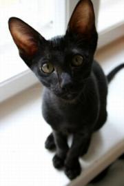Black cat in a window