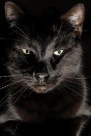 Evil-looking black cat