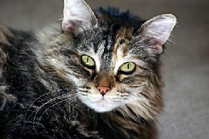 Purring-cat.jpg