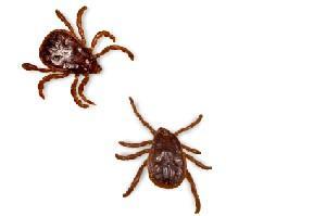 pair of ticks