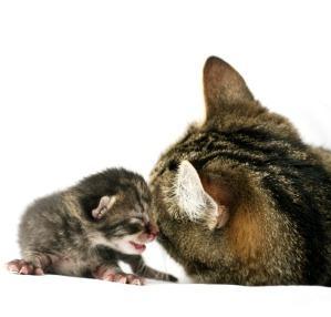 Newborn Kittens The First 48 Hours