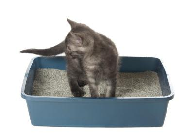 Is Clumping Cat Litter Safe