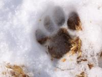 Melting paw print