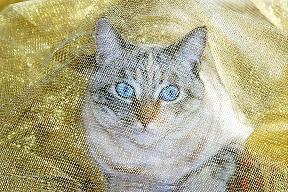 closeup of cat in outdoor cat run