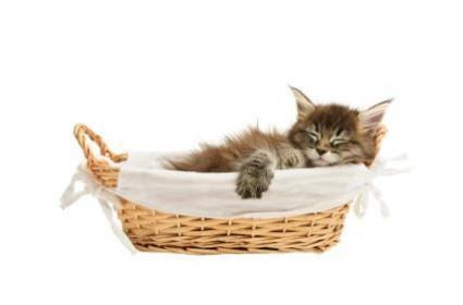 Exhausted kitten laying in a basket