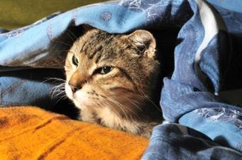 Feline closeup