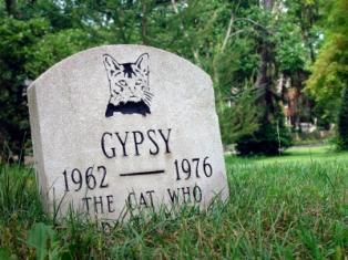 A cat's grave