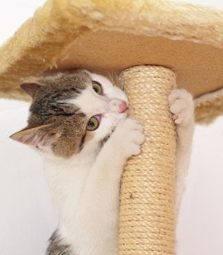 Cat scratching a cat tree