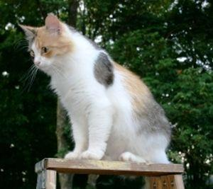 Calico cat looking out at the world