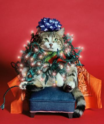 Christmas Cats To Put You In A Festive Mood Lovetoknow