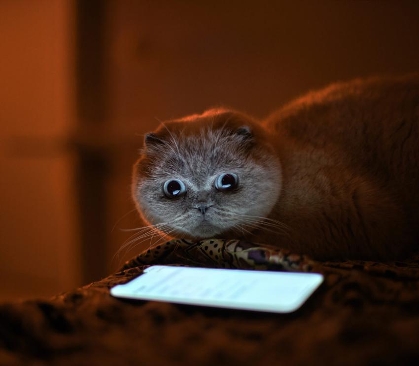 https://cf.ltkcdn.net/cellphones/images/slide/253711-850x744-12-funny-cell-phone-pictures.jpg