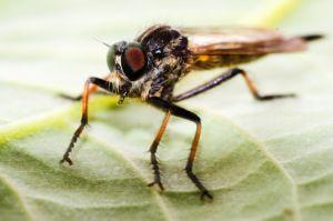 Mosquito Ringtone Sample