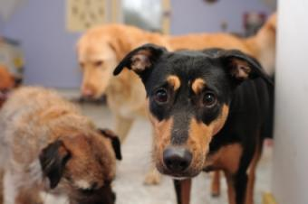Fundraising Ideas for Rescue Dogs