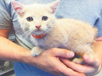 Volunteer at animal shelter holding a rescued cat