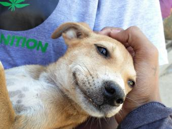 Stray dog enjoying being held by rescue volunteer