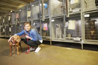 Female volunteer at animal shelter