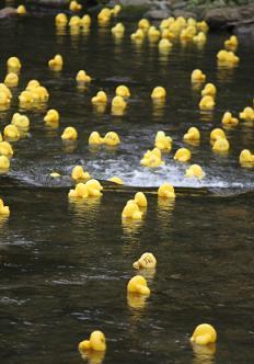 https://cf.ltkcdn.net/charity/images/slide/74620-232x332-duck-race.jpg
