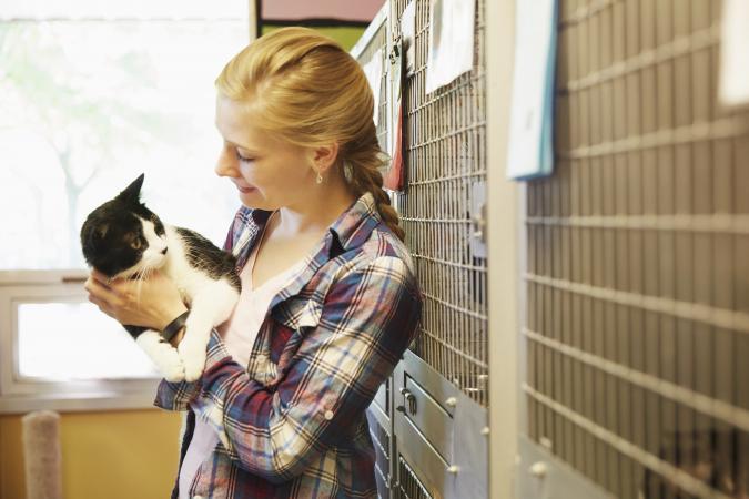 Woman volunteer at animal shelter petting cat