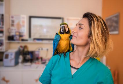 Woman veterinarian with parrot on her shoulder