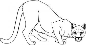 https://cf.ltkcdn.net/cheerleading/images/slide/51596-800x420-Cougar-mascot.jpg