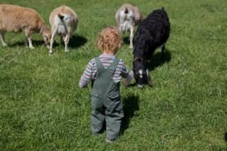 toddler on farm