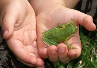 Child holding green frog.