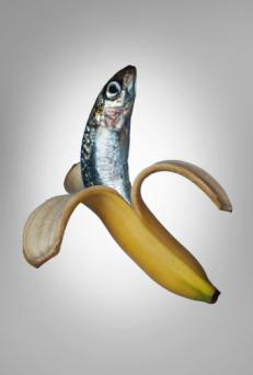 A fish in a banana peel