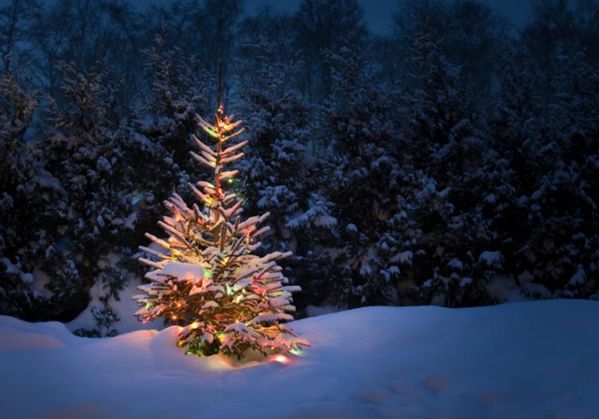 https://cf.ltkcdn.net/christmas/images/slide/253928-850x595-9_christmas-tree-in-snow.jpg