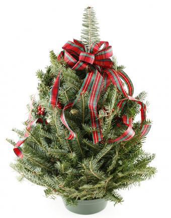 https://cf.ltkcdn.net/christmas/images/slide/183210-668x850-christmas-tree-plaid-ribbon.jpg