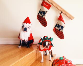 Dressed Up Dogs in Christmas costumes and stockings