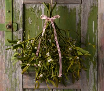 Christmas mistletoe with white and red ribbon bow