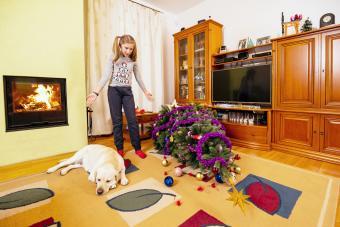 Girl arguing her dog near fallen Christmas tree