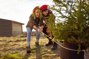 Two young women pull a Christmas tree with pot.